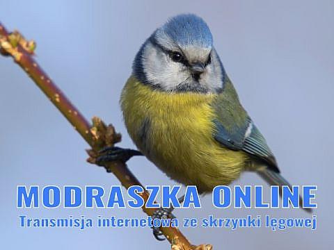 fot. Modraszka online